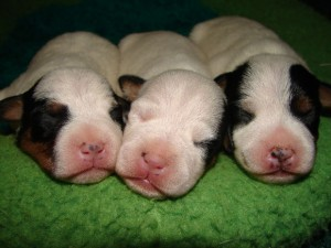 Money buys puppies, and puppies bring happiness.  Therefore, money CAN buy happiness!