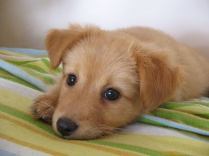 When I start to feel like that, I like to look at a puppy to make me happier.